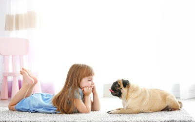 5 Things Every Home With Pets Needs